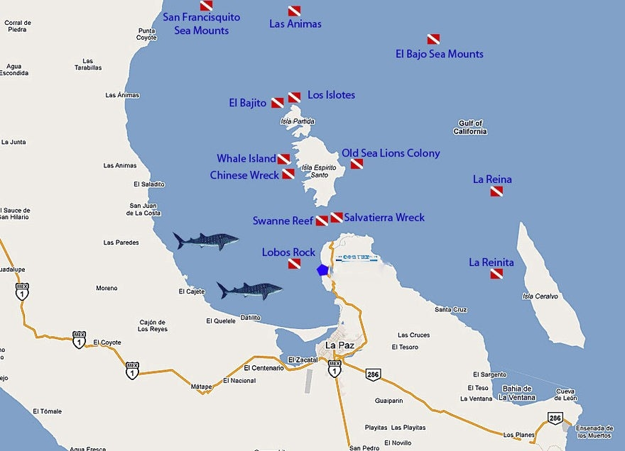 Sitios Buceo La Paz BCS