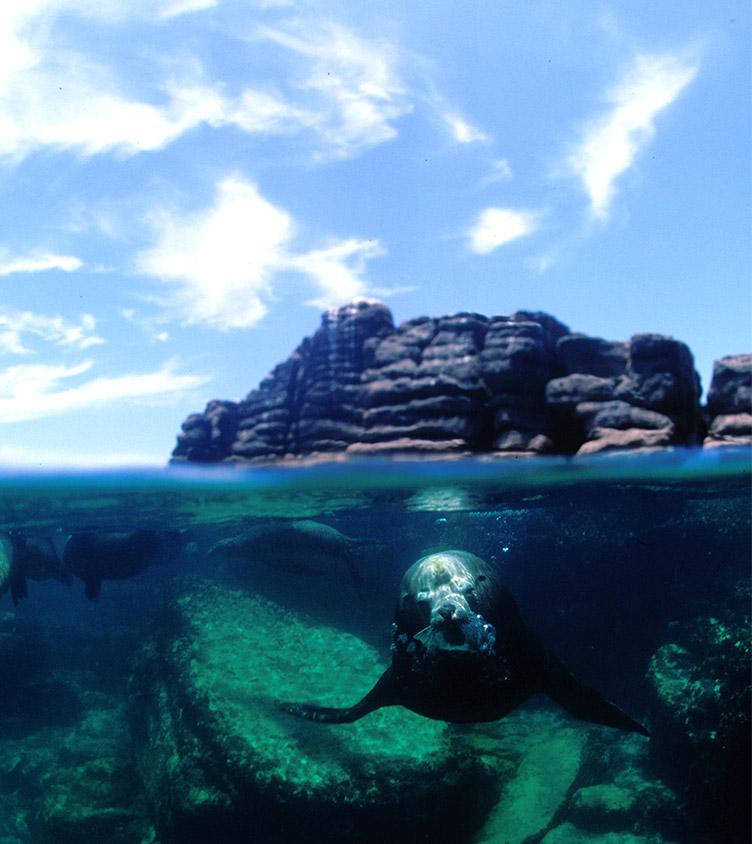 scuba_diving_left