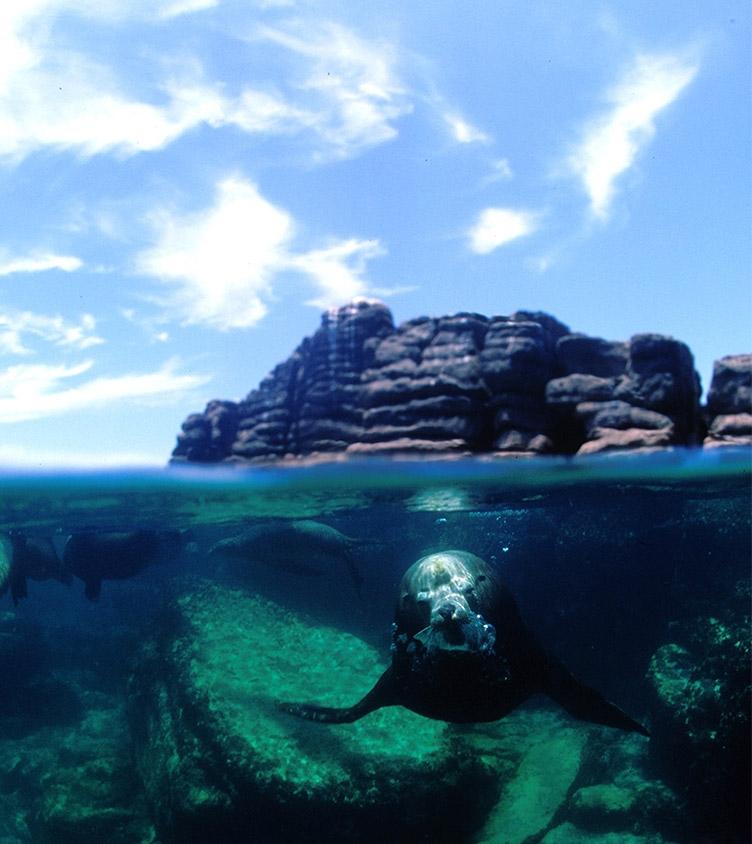 Learn to scuba dive california