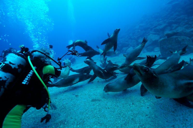 Dive Report